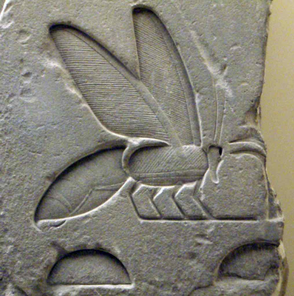 Ancient Bee