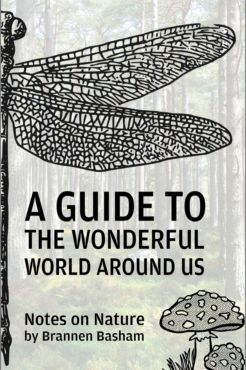 A Guide to the Wonderful World Around Us: Notes on Nature by Brannen Basham