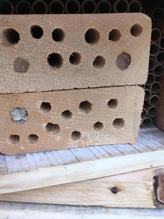 After only a few days we have some nesters! Holes filled with mud are from mason bees, the leaves are from leaf cutter bees!