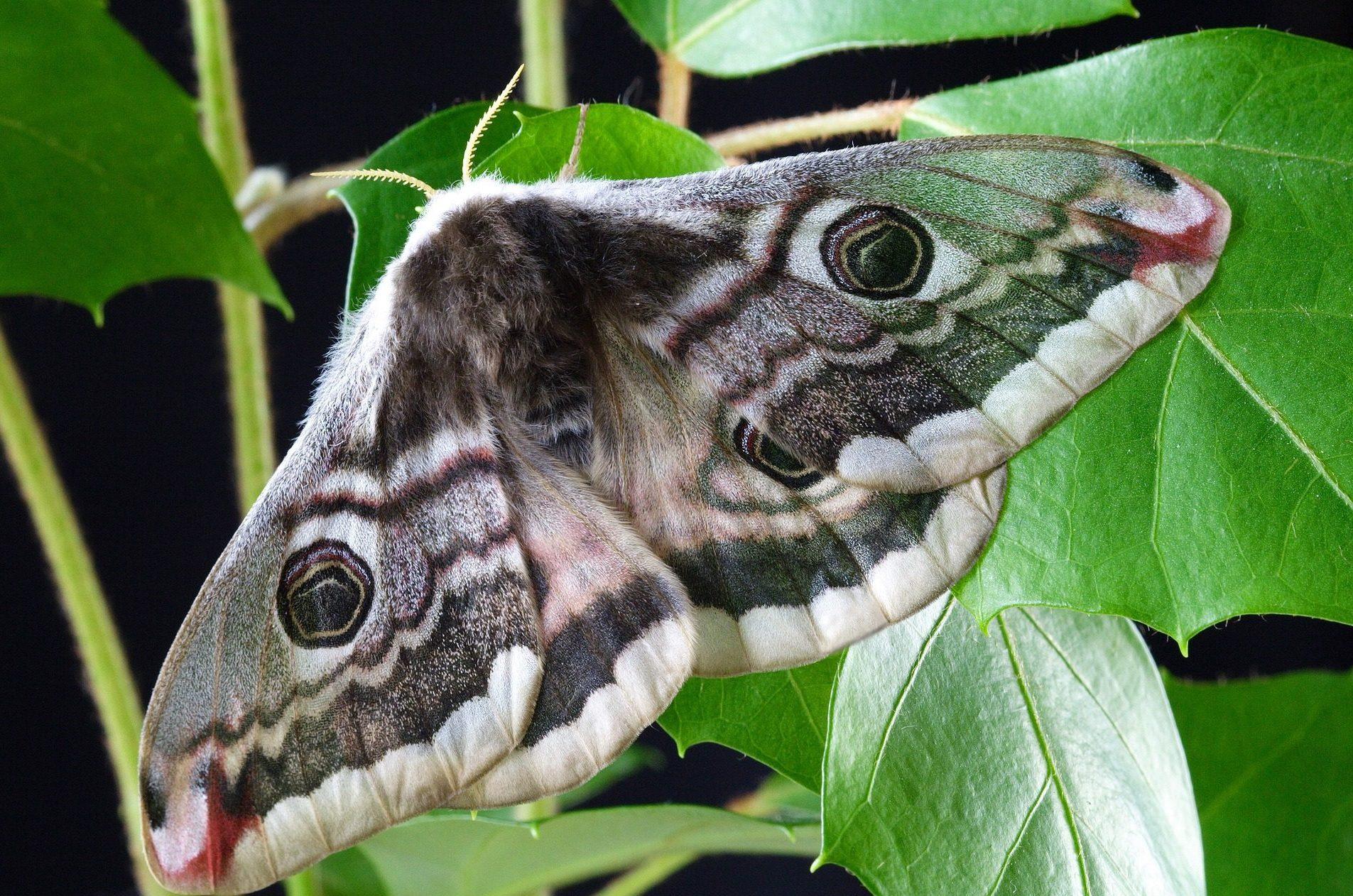 moth-1720868_1920