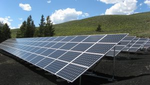 Solar fields and pollinators