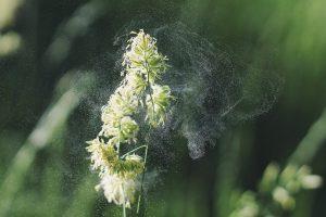 Pollen - Pollen's Peculiar Path