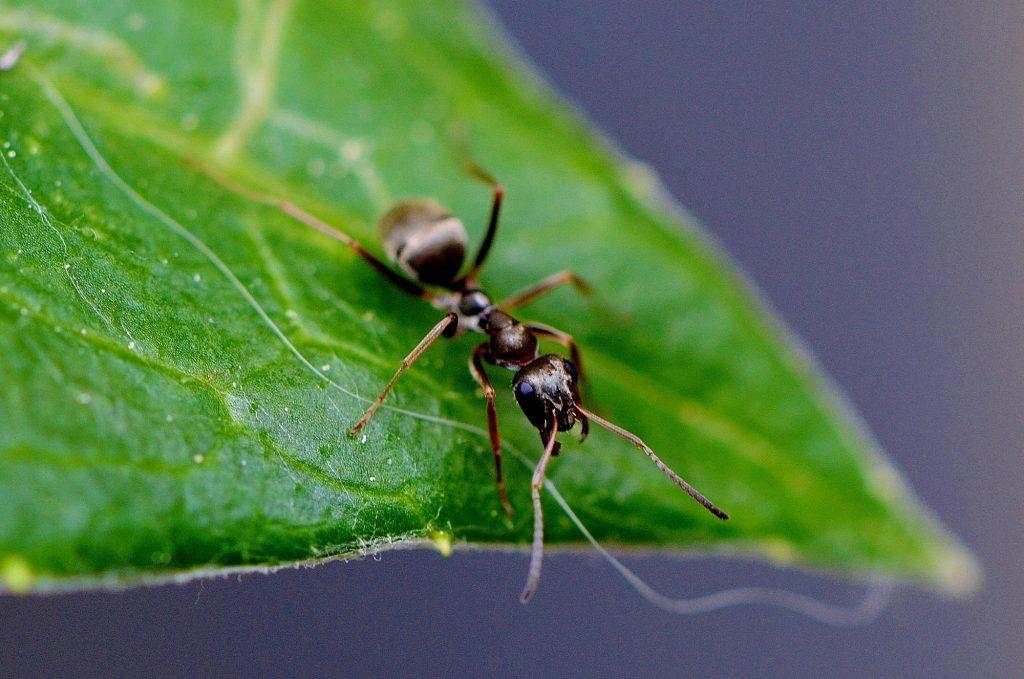 ant-771071